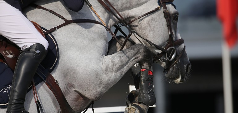 Flashback on the Liège Show Jumping...